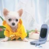 Cute Puppies Puzzle