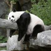 Pandas Slide