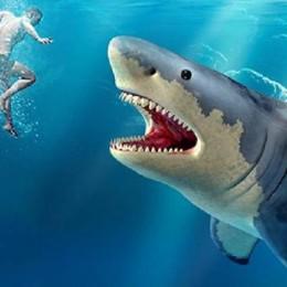 Shark Hunting